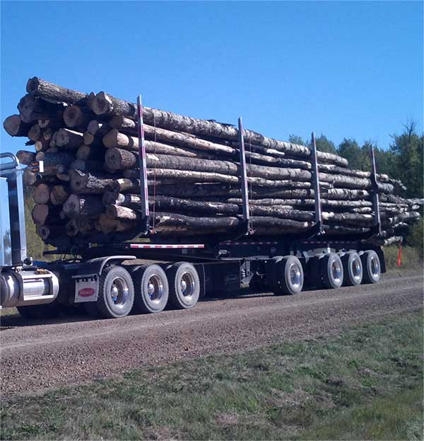 A forestry truck full of logs